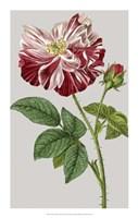"Vintage Garden Varieties II by Vision Studio - 14"" x 22"""