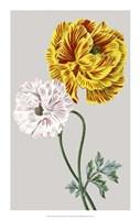 "Vintage Garden Varieties III by Vision Studio - 14"" x 22"""