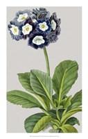 """Vintage Garden Varieties IV by Vision Studio - 14"""" x 22"""""""