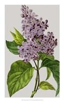 "Vintage Garden Varieties V by Vision Studio - 14"" x 22"""