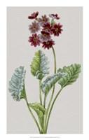 "Vintage Garden Varieties VI by Vision Studio - 14"" x 22"""