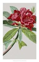 """Vintage Garden Varieties VII by Vision Studio - 14"""" x 22"""""""