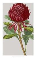 """Vintage Garden Varieties VIII by Vision Studio - 14"""" x 22"""""""