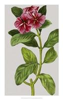 "Vintage Garden Varieties IX by Vision Studio - 14"" x 22"""