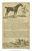 "14"" x 22"" Horse Prints"