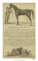 "Horse Portraiture II - 14"" x 22"""