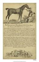 """Horse Portraiture VII - 14"""" x 22"""""""