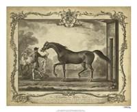 "Distinguished Horses IV - 22"" x 18"""