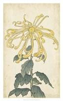 "Elegant Chrysanthemums II - 20"" x 32"""