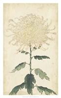 """Elegant Chrysanthemums III - 20"""" x 32"""""""