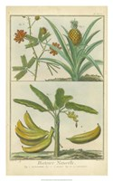 Histoire Naturelle Tropicals II Framed Print