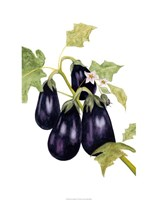 Watercolor Eggplant Fine Art Print