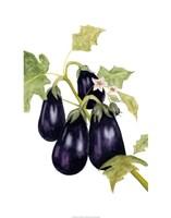 Watercolor Eggplant Fine Art Print