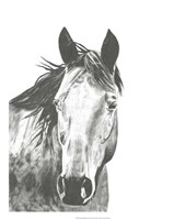 Wildlife Snapshot: Horse I Fine Art Print