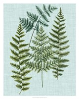 Spa Ferns II Fine Art Print