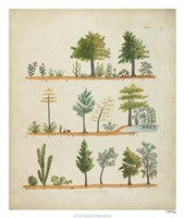 Arbor Sampler II Fine Art Print