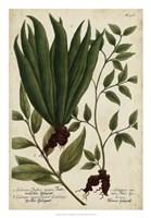 Vintage Tropicals VI Fine Art Print