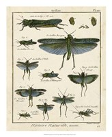 """Histoire Naturelle Insects II by Denis Diderot - 18"""" x 22"""""""