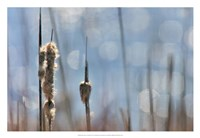 Light Dance on Cattails II Framed Print