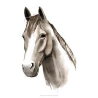 """Western Animal Study II by Grace Popp - 20"""" x 20"""""""