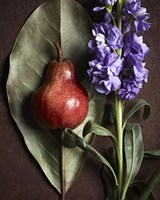 Leaf with Pear 2 by Michael Harrison - various sizes
