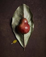 Leaf and Pear 4 by Michael Harrison - various sizes