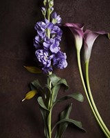 Flowers by Michael Harrison - various sizes