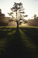 Tree and Light by Michael Harrison - various sizes, FulcrumGallery.com brand