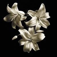 Three Lilies Fine Art Print