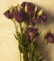 Lisianthus by Michael Harrison - various sizes