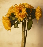 Sunflowers by Michael Harrison - various sizes, FulcrumGallery.com brand