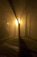 Light Through The Mist Fine Art Print