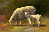 Spring Lamb Fine Art Print