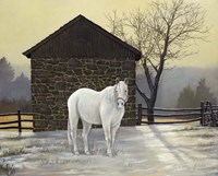 Mare Shed by Jerry Cable - various sizes