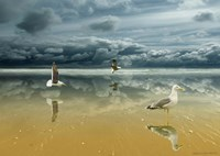 Seagulls on the Beach Fine Art Print