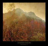 Autumn Colors 2 Fine Art Print