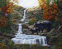 Black Bear Falls Fine Art Print