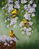 Goldfinch Blossoms Fine Art Print
