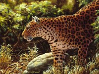 On The Prowl Fine Art Print