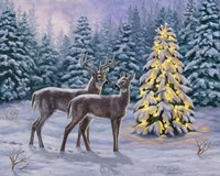 White-tail Christmas Fine Art Print