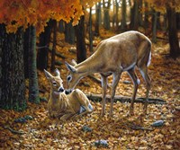 Autumn Innocence II Fine Art Print