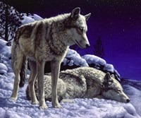 Night Watch by Crista Forest - various sizes