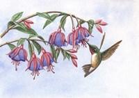 Fushia's Delight Fine Art Print