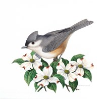 Studio Friends - Titmouse Fine Art Print