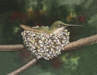 Hummer a Nesting by Dempsey Essick - various sizes