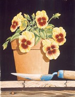 Potted Pansies Fine Art Print