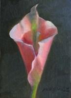Pink Cala Lily Fine Art Print