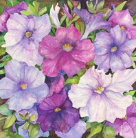 Petunias by Joanne Porter - various sizes