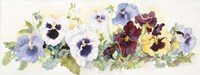 Pansies On Parade Fine Art Print