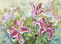 Stargazer Lilies Fine Art Print